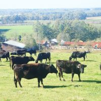和牛の品種、歩留等級と肉質等級の判定、決め方、栄養は?