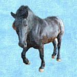 馬刺しの馬ってどんな馬?