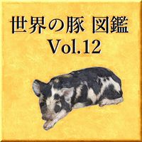 世界の豚 図鑑 Vol.12