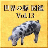 世界の豚 図鑑 Vol.13