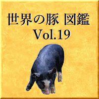世界の豚 図鑑 Vol.19