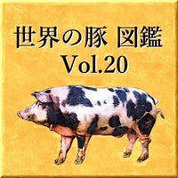世界の豚 図鑑 Vol.20