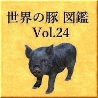 世界の豚 図鑑 Vol.24