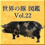 世界の豚 図鑑 Vol.22