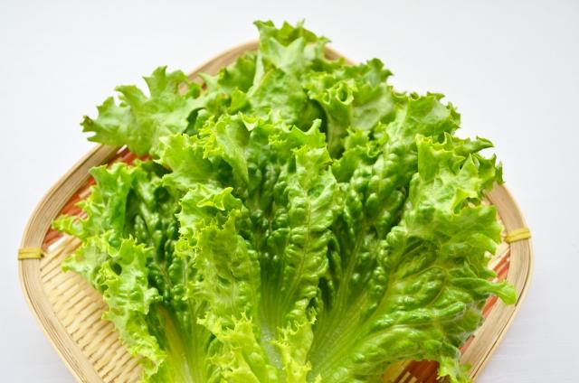 レタスはダイエットに欠かせない野菜って理由は?隠れた効果・効能は?